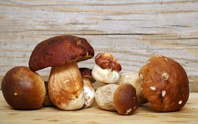 Menù Degustazione Funghi